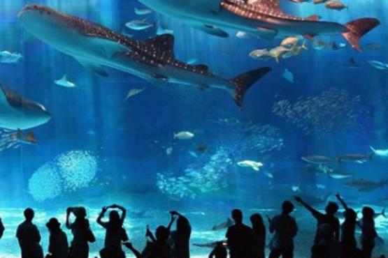 THE FIRST AQUARIUM IN THE URALS TO OPEN IN YEKATERINBURG