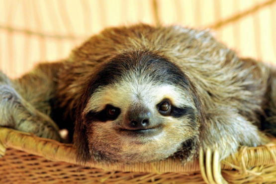 In the UK, created a nursing home for sloths