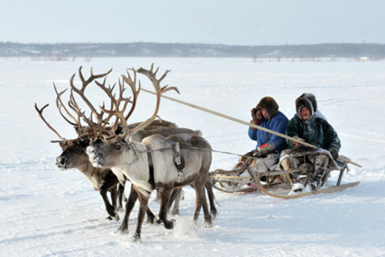 Yamal has developed a tour to the Arctic Circle